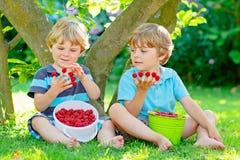 Deux petits amis, garçons d'enfant ayant l'amusement à la ferme de framboise en été Photos stock