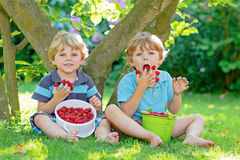 Deux petits amis, garçons d'enfant ayant l'amusement à la ferme de framboise en été Image libre de droits