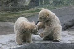Deux petits animaux d'ours blanc Photos stock