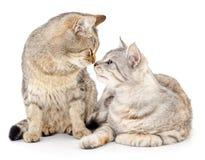Deux petits chatons Photos stock