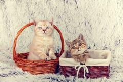 Deux petits chatons Photo libre de droits