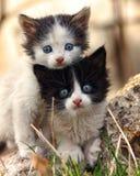 Deux petits chatons effrayés regardant l'appareil-photo Photographie stock libre de droits