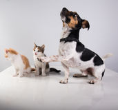 Deux petits chatons et chiens mignons Images libres de droits