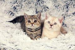 Deux petits chatons sur la couverture Photo stock