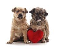Deux petits chiens avec un coeur de jouet images libres de droits