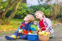 Deux petits enfants jumeaux adorables sélectionnant des pommes Images stock