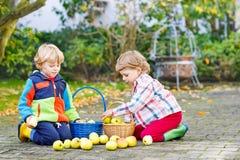 Deux petits enfants jumeaux adorables sélectionnant des pommes Images libres de droits
