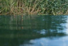 Deux petits flotteurs de pêche dans l'eau Image libre de droits