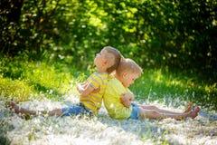Deux petits garçons, amis, enfants irrités dans le jour d'été Concentré Image stock