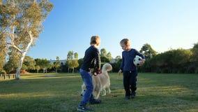 Deux petits garçons courant avec le golden retriever en parc clips vidéos