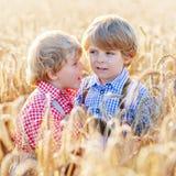Deux petits garçons d'enfant de mêmes parents ayant l'amusement et parlant du blé jaune Photographie stock