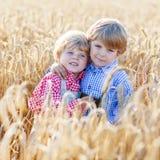 Deux petits garçons d'enfant de mêmes parents ayant l'amusement et parlant du blé jaune Images stock