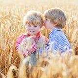 Deux petits garçons d'enfant de mêmes parents ayant l'amusement et parlant du blé jaune Photographie stock libre de droits