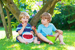 Deux petits garçons d'enfant de mêmes parents mangeant des framboises dans le jardin de la maison Photographie stock