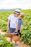Deux petits garçons d'enfant de mêmes parents sur la fraise cultivent en été Photo libre de droits