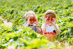 Deux petits garçons d'enfant de mêmes parents sur la fraise cultivent en été Photographie stock
