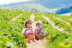 Deux petits garçons d'enfant de mêmes parents sur la fraise cultivent en été Photos stock