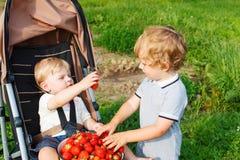Deux petits garçons d'enfant en bas âge d'enfant de mêmes parents sur la fraise cultivent en été Image libre de droits