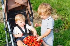 Deux petits garçons d'enfant en bas âge d'enfant de mêmes parents sur la fraise cultivent en été Images stock