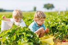 Deux petits garçons d'enfant en bas âge d'enfant de mêmes parents sur la fraise cultivent en été Images libres de droits