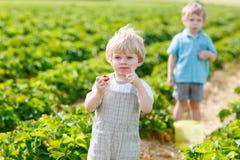 Deux petits garçons d'enfant en bas âge d'enfant de mêmes parents sur la fraise cultivent en été Photographie stock libre de droits