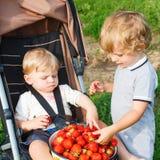 Deux petits garçons d'enfant en bas âge d'enfant de mêmes parents sur la fraise cultivent en été Photographie stock