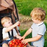 Deux petits garçons d'enfant en bas âge d'enfant de mêmes parents sur la fraise cultivent en été Photos libres de droits