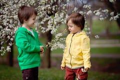 Deux petits garçons en parc sous un arbre de floraison Images stock