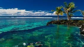 Deux petits garçons nageant sous l'eau sur la plage de corail clips vidéos