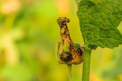 Deux petits insectes mangeant des feuilles en parc images libres de droits