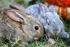 Deux petits lapins image libre de droits