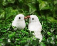 Deux petits oiseaux dans l'amour regardant l'un l'autre Image stock
