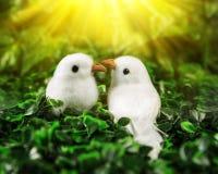 Deux petits oiseaux dans l'amour regardant l'un l'autre Photographie stock