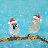 Deux petits oiseaux drôles se reposant sur une branche en hiver dans la neige illustration libre de droits