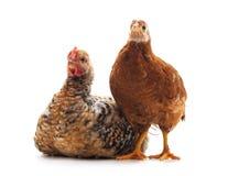 Deux petits poulets photos libres de droits