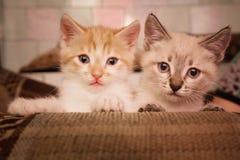 Deux petits redheads gris mignons se reposent sur le sofa dans la chambre photos libres de droits
