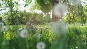 Deux pieds d'amis se trouvant sur l'herbe en parc le jour ensoleillé d'été Photo stock