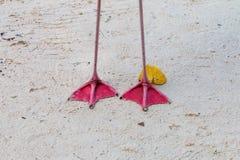 Deux pieds de flamant sur la plage Photographie stock