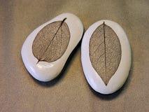Deux pierres avec des squelettes de feuilles Images libres de droits