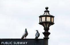 Deux pigeons Photographie stock libre de droits