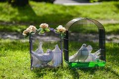 Deux pigeons blancs de mariage dans la cage Photo stock