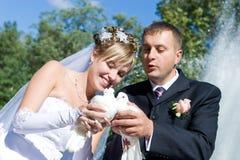 Deux pigeons dans des mains des couples neuf-mariés Photo stock