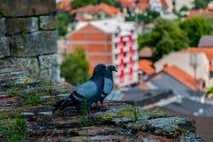 Deux pigeons regardant la ville Photos stock