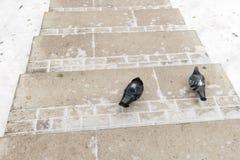 Deux pigeons sur un chemin couvert de neige dans Tsaritsino se garent, Moscou Image libre de droits