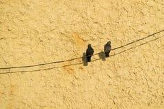 Deux pigeons sur un fléchissement de câble le long du mur, un fond d'orange Photographie stock libre de droits
