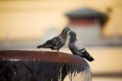 Deux pigeons sur une fontaine Images libres de droits
