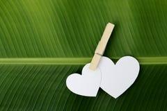 Deux pincements de papier de coeur par l'agrafe sur la feuille de banane Image libre de droits