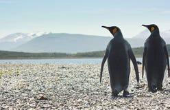 Deux pinguins de roi près de forme de mer l'appareil-photo Photo stock
