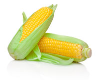 Deux épis de maïs frais d'isolement sur le fond blanc Images libres de droits
