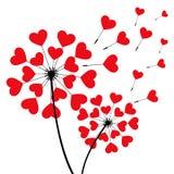 Deux pissenlits romantiques en forme de coeur Images libres de droits